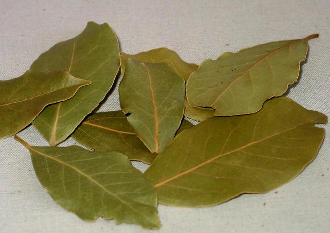 laurbærblad