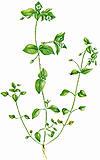 vigdelstranda botanisk